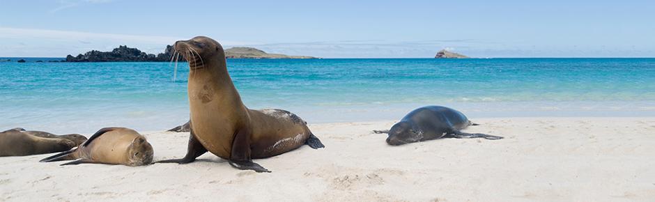 Western Galapagos Cruise + Quito