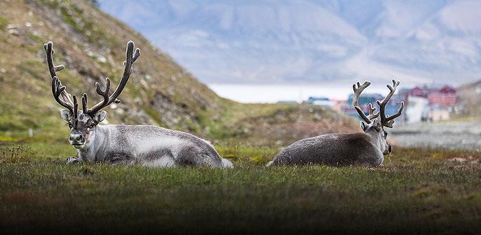 Arctic Allure: Spitsbergen and the Midnight Sun